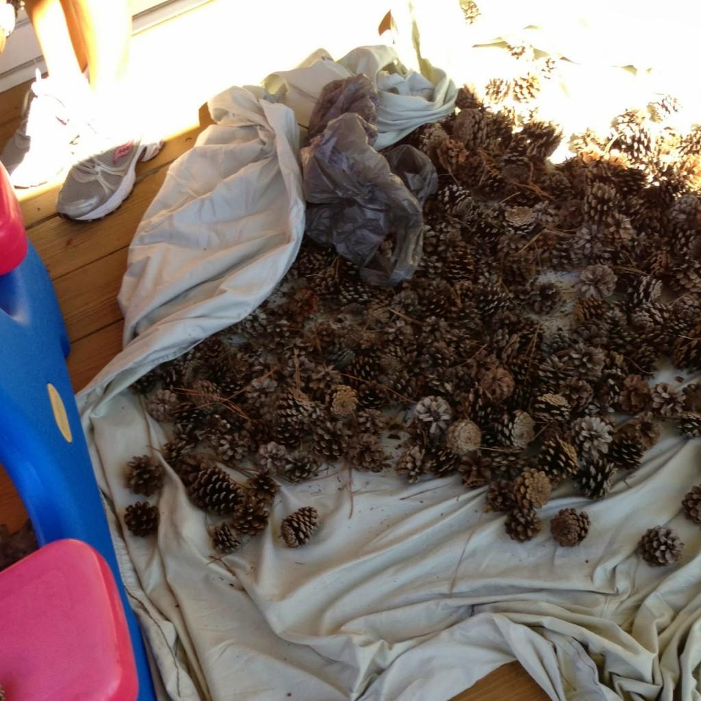 pinecones-in-sheet
