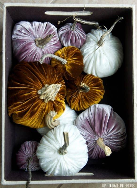 velvet-pumpkins-box