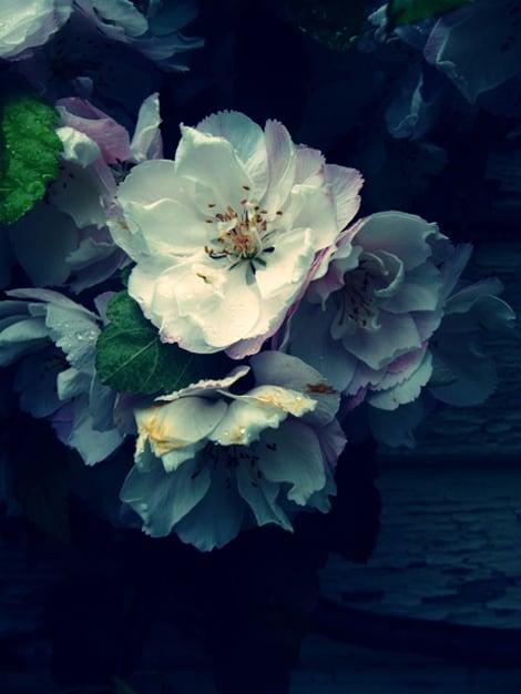a-blue-story_flowers