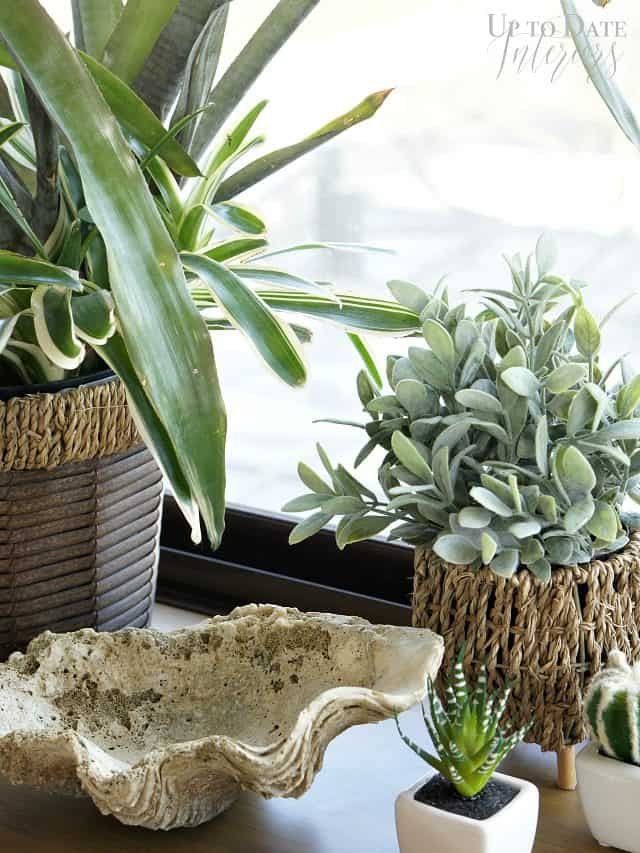 plants in bedroom for $100 makeover