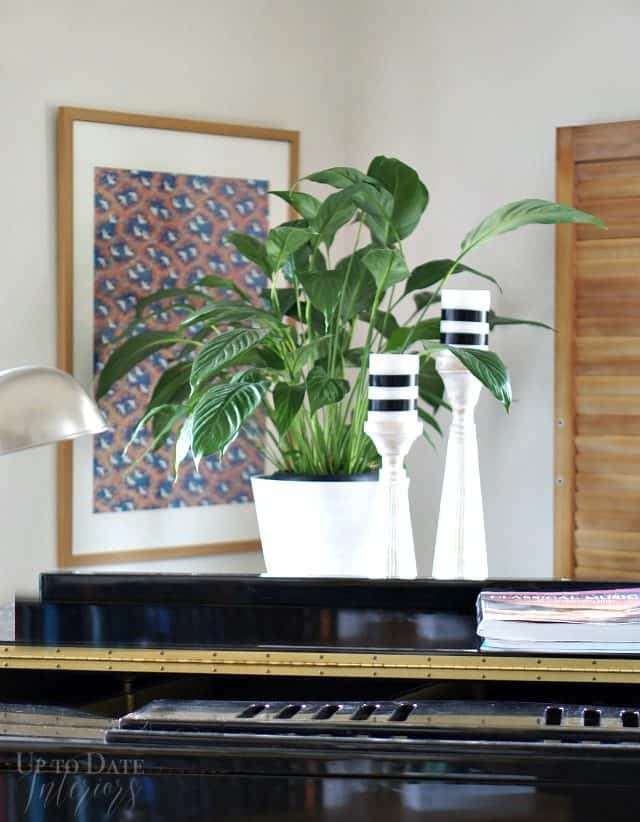 use plants in a rental to make it feel like home