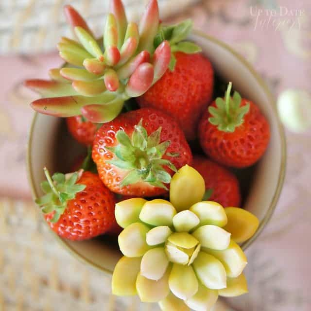 strawberries and succulents